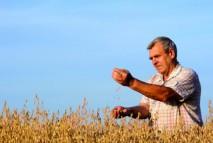 A man standing in field of oats