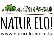 Logo und URL soliloquy