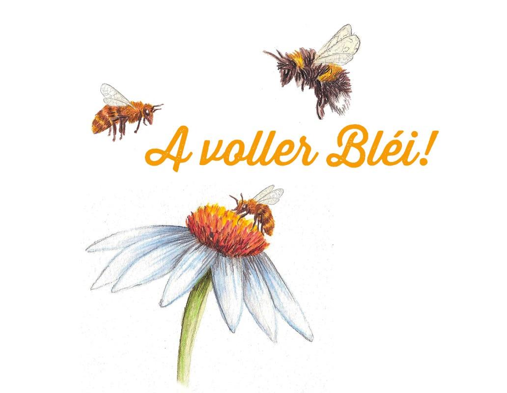 A voller Bléi_kleiner