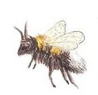 Biene einzeln_nach links
