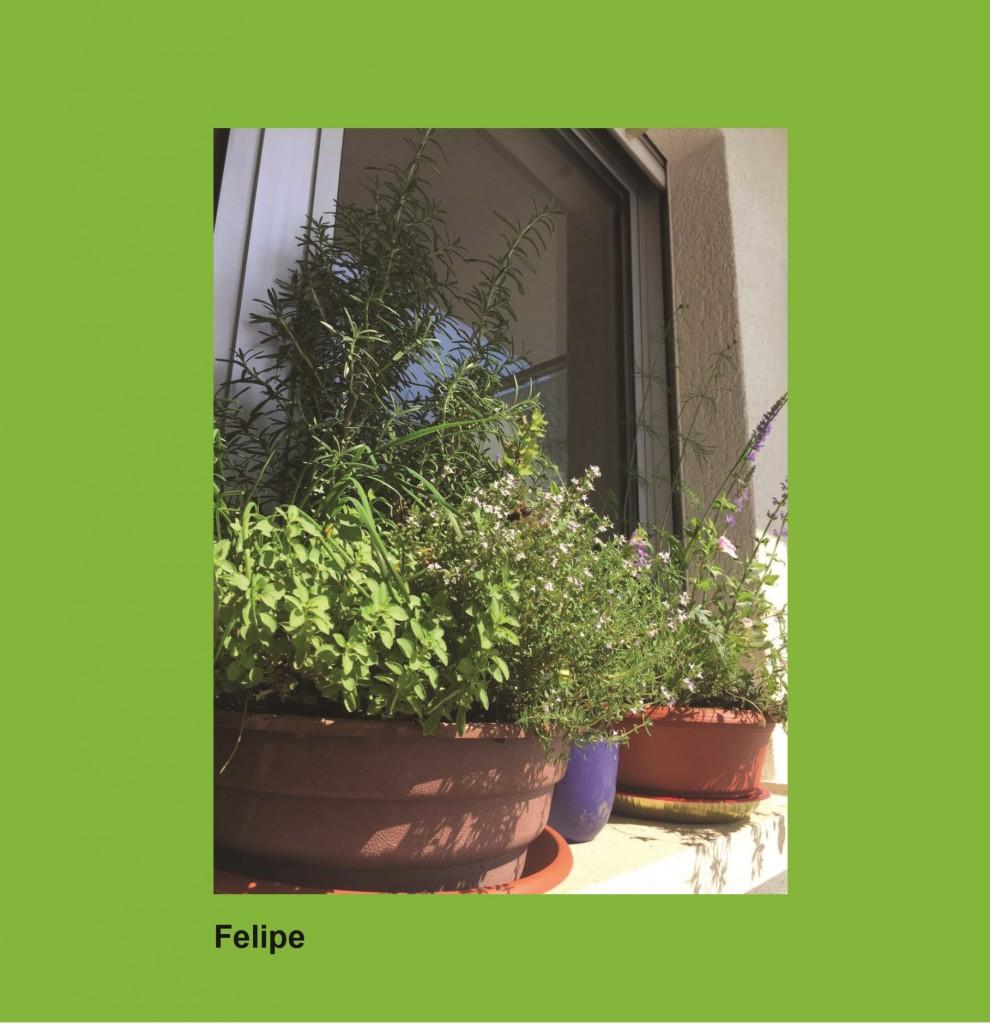 Blummen-Këscht Felipe_Hntergrund