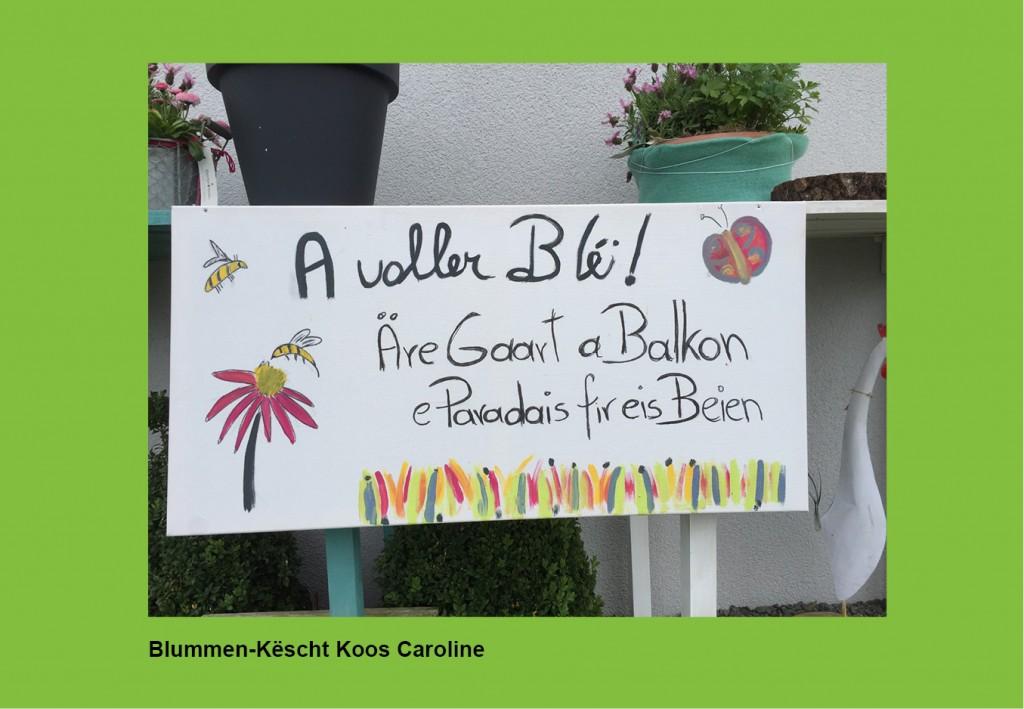 Blummen-Këscht Koos Caroline_Hintergrund