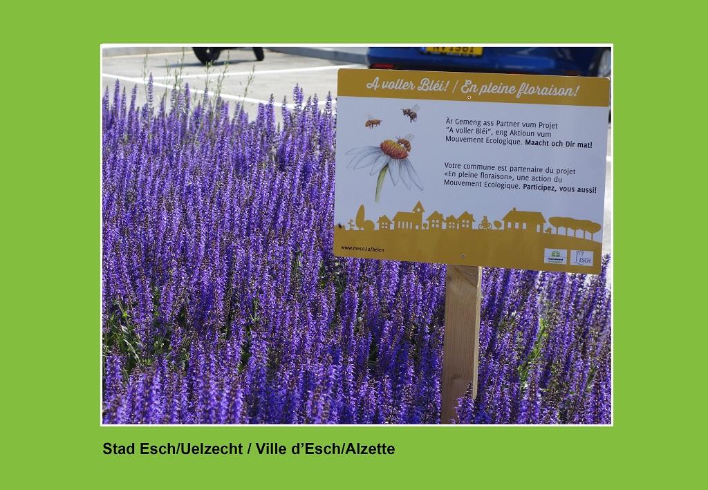Ville d'Esch 2 RGB_meco.lu_1024x709