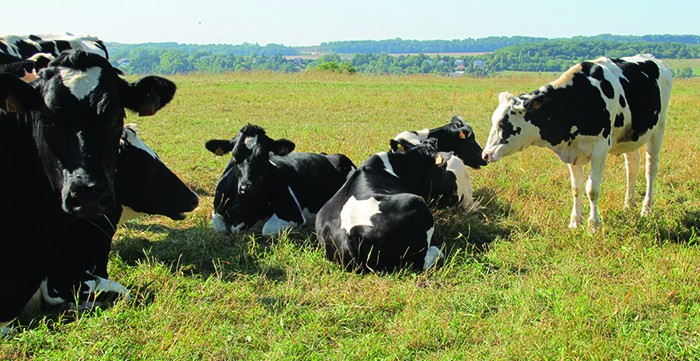 Kühe Nutztiere Landwirtschaft_news