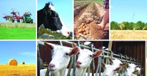landwirtschaft_news