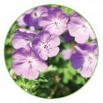 A voller Bléi Blumenelement 1